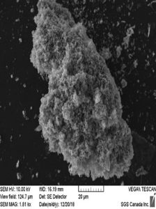 SEM Micrograph Showing Nanoparticles